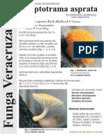 FUNGA VERACRUZANA Num.74 Cyptotrama asprata