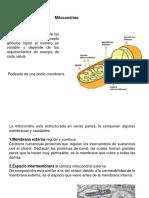 mitocondriasycloroplastos-090710093004-phpapp02