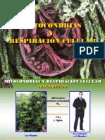 mitocondriasyrespiracincelular-131129104005-phpapp01