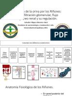 Formaciondelaorinaporlosrionesifiltracionglomerularflujosanguineorenalysucontrol 150321183101 Conversion Gate01