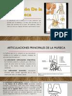 Muñeca Tec Radiografica 1