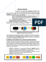 GEN DE LA INSULINA.docx