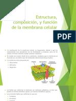 Estructura, Composición, y Función de La Membrana