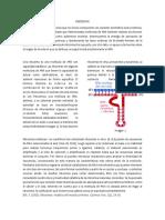 RIBOZIMAS TECNICAS MOLECULARES.docx