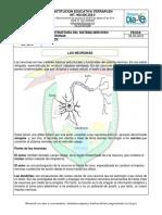 LAS NEURONAS.docx