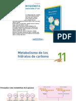 Presentación Cap-11 Glucolisis Metb Carbhidratos