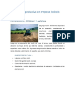 Proceso productivo en empresa frutícola.pdf