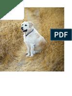 Reiki for Dogs 40-53