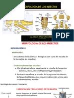 Clase 2 Entomologia General