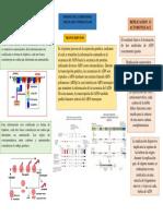mapa conceptual biologia.docx