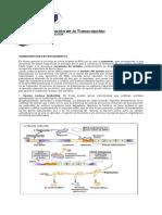 Diferenciación Celular y Genes Homéoticos