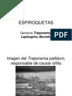 31-treponema.ppt