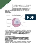 Núcleo celular a.docx