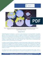 Artículo no. 61 La paradoja igual pero diferente, la necesidad de niveles de desempeño Laura Frade F.pdf