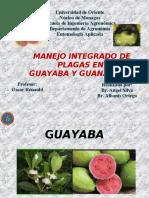 Guayaba y guanbana