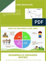 AREAS DE DESARROLLO DEL NIÑO