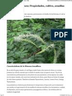 Mimosa tenuiflora_ Propiedades, cultivo, semillas y más.pdf