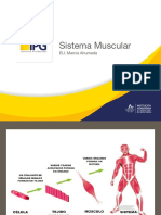 6°Sistema Muscular.pdf