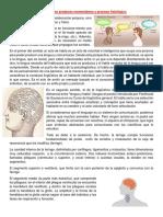 El Habla Como Producto Momentáneo y Proceso Fisiológico