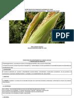 Proyecto Del Maiz Ulloa 2019