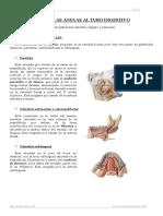 Glandulas Anexas Al Tubo Digestivo