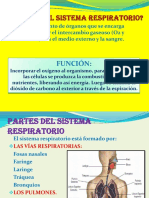 sistema respiratorioo.pdf
