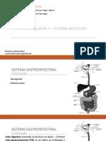 4 Sistema Digestivo