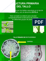botanica morfologica