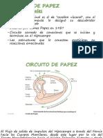 CIRCUITO DE PAPEZ.pptx