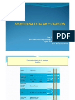 Membrana Plasmática II