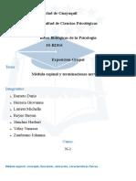 Medulayterminaciones.docx