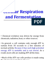 Cellular respiration and fermentation (2 files merged).pdf