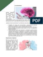 El cerebro emocional y sus decisiones BRISNA.docx