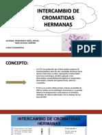 Expo citogenetica.pptx