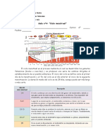 6°-Guía-n°4-Ciclo-menstrual.pdf