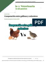 Gallinas vs codornices