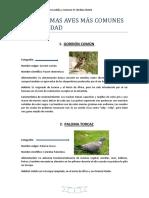 Sonogramas Aves.