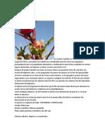 LA FLOR DE JAMAICA.docx