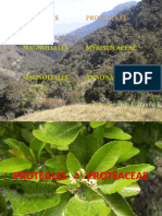 1. PROTEALES - PROTEACEAE