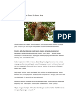 Hikayat Batu Dan Pohon Ara.docx
