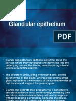 1.2 Glands (2)