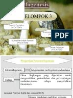 makalah fotomorfogenesis