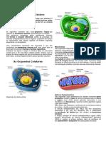 Resumo de Algumas Organelas-Celulares