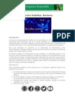 Bacilus subtillus.pdf