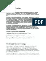 micro algas.docx