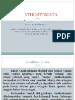 GNATHOSTOMATA.pptx