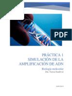 Simulación de la aplificacion del ADN- Adriana Aranda.docx
