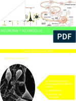 Neurona y Neuroglia Cadl2