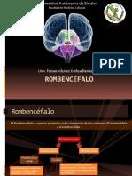 rombencfalo-131208155749-phpapp02
