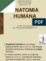 Cortes Anatomicos e Posições